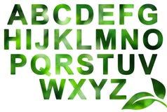 Alfabeto verde de la naturaleza en blanco Imágenes de archivo libres de regalías
