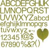 Alfabetos verdes, números y caracteres especiales Fotos de archivo