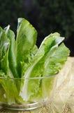 Alface cos verde na bacia de vidro Imagens de Stock