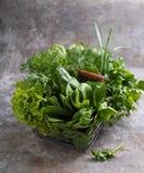 Alface de romaine verde Fotografia de Stock