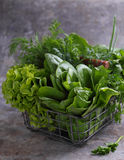 Alface de romaine verde Fotos de Stock Royalty Free