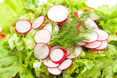 Alface e radishes Fotografia de Stock