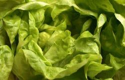 Alface fresca Foto de Stock Royalty Free
