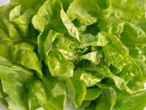 Alface fresca verde-clara da manteiga Foto de Stock Royalty Free