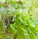 Alface orgânica fresca Foto de Stock Royalty Free