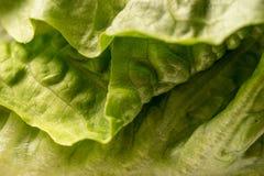 A alface orgânica verde friável sae, quadro completo Imagem de Stock Royalty Free