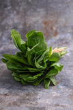 Alface romana verde Imagem de Stock