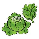 Alface verde ilustração royalty free