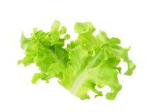 Alface verde do carvalho isolada no branco Imagem de Stock