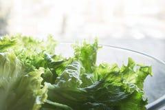 Alface verde fresca Fotos de Stock Royalty Free