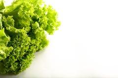Alface verde orgânica fresca em um fundo branco foto de stock royalty free