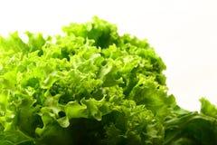 Alface verde orgânica fresca em um fundo branco imagem de stock