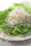 Alfalfa. Sprouts on a lettuce leaf Stock Images