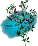 alfalfa illustrazione vettoriale