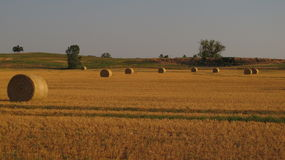 Alfalfa Bales Landscape. Bales of alfalfa shine nicely from the setting Oklahoma summer sun Stock Photography