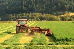 Alfalfa Cut stock photos
