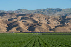 Lush green alfalfa farm field and mountains in Southern California. An irrigated farm field of alfalfa set against the backdrop of the San Emigdio Mountains near stock photography