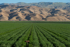Lush green alfalfa farm field and mountains in Southern California Royalty Free Stock Photography