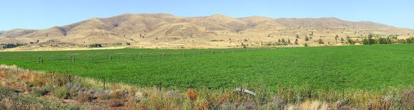 Alfalfa farms and fields panorama. Royalty Free Stock Images