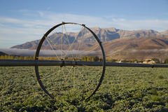 Alfalfa field in the autumn in a high mountain valley Royalty Free Stock Images