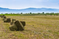 Alfalfa hay bale on fresh cutted agricultural field. Blue mountains on the background royalty free stock image