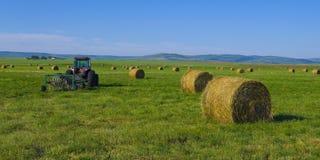 Free Alfalfa Hay Bales Stock Photography - 15465982