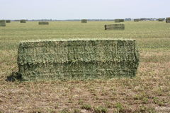 Alfalfa hay bales Stock Photography