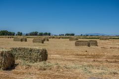 Alarge ton alfalfa hay bales stacked with pitch fork on farm. Alfalfa hay bales stacked pitch fork farm horses livestock feed country agricultural agriculture royalty free stock photography