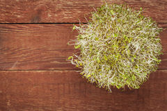 Alfalfa and radish sprouts Stock Photography