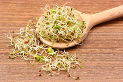 Alfalfa and radish sprouts on scoop, wooden background Stock Photos