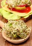Alfalfa and radish sprouts on spoon and vegetarian sandwich Stock Photography