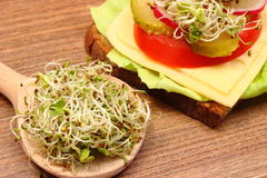 Alfalfa and radish sprouts on spoon and vegetarian sandwich Royalty Free Stock Photos