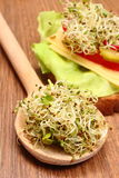 Alfalfa and radish sprouts on spoon and vegetarian sandwich Royalty Free Stock Images