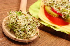 Alfalfa and radish sprouts on spoon and vegetarian sandwich. Alfalfa and radish sprouts on wooden spoon and freshly prepared vegetarian sandwich lying on wooden Royalty Free Stock Image