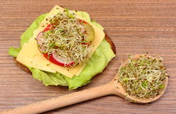 Alfalfa and radish sprouts on spoon and vegetarian sandwich Royalty Free Stock Image