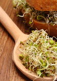 Alfalfa and radish sprouts on spoon and wholemeal bread roll Royalty Free Stock Photo