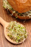 Alfalfa and radish sprouts on spoon and wholemeal bread roll Royalty Free Stock Images