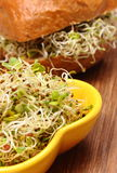 Alfalfa and radish sprouts with wholemeal bread roll Stock Photography