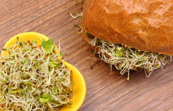 Alfalfa and radish sprouts with wholemeal bread roll Stock Photo