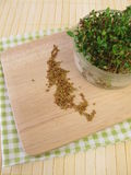 Alfalfa seeds and sprouts Stock Photography
