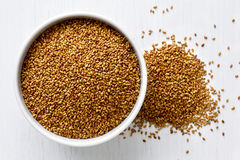 Alfalfa seeds.  Royalty Free Stock Photo