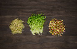 Alfalfa,snow peas and lentils sprouts Stock Photography