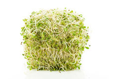 Alfalfa Sprout Stock Images