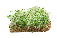 Alfalfa sprouts. Sandwich with alfalfa sprouts isolated on white Royalty Free Stock Images