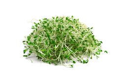 Alfalfa Sprouts Royalty Free Stock Photos