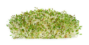 Alfalfa sprouts isolated on the white background Stock Photo