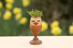 Alfalfa sprouts with narcissus background. In empty egg Stock Image