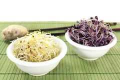 Alfalfa sprouts and radish sprouts Stock Photography