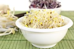 Alfalfa sprouts and radish sprouts Royalty Free Stock Image