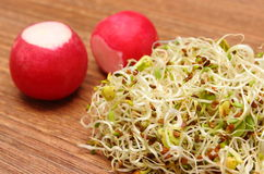 Alfalfa sprouts and radish on wooden table Stock Images